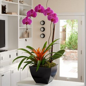 ProFlowers Orchid Bromeliad
