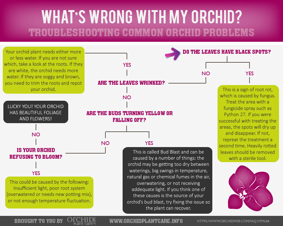 Orchid Plant Health