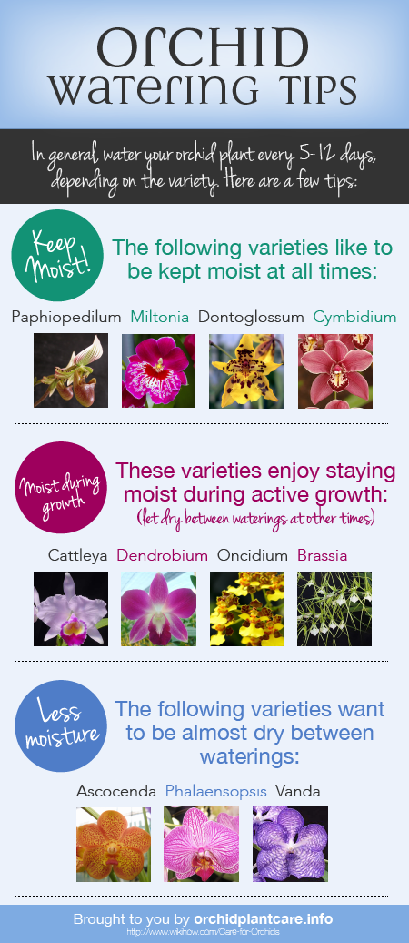 Orchid Watering Information